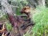 bear9