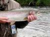 alaska-floats-fish06