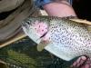 alaska-floats-fish22