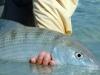 as-fish09