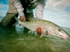 as-fish22