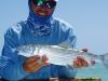bh-fish20