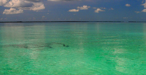Bh header05 for Bahia honda fishing