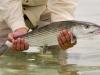 bl-fish18