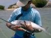 los-roques-fish45