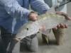 costa-de-cocos-fish25