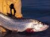 cuzan-fish13