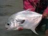 cuzan-fish15