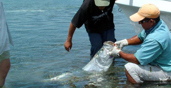 Cancun fly fishing day trips tulum cozumel fly fishing for Cozumel fishing charters