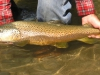 el-patagon-chile-trout25