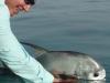 El Pescador - Permit