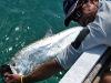 El Pescador - tarpon