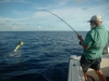 h2-fish25