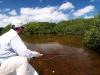 yucatan-tarpon-ids02