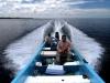 yucatan-tarpon-scene-ids03