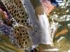 mongolia-taimen-fishing01
