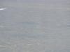 mongolia-taimen-fishing34