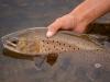mongolia-taimen-fishing40