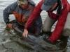 taimen-fishing-mongolia-1-1000x600