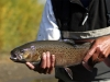 trout-fly-fishing-mongolia-fish-river
