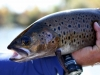 trout-mongolia-fly-fishing