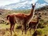 patagonia-scene26