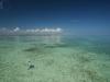 pesca-maya-fish01