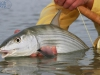 pesca-maya-fish08