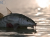 pesca-maya-fish10