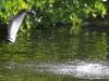 pesca-maya-fish16