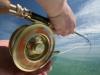 pesca-maya-fish22