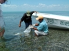 pesca-maya-fish25