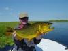 pira-flyfishing-dorado034