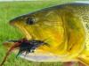 pira-flyfishing-dorado036