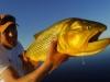 pira-flyfishing-dorado046