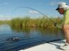 pira-flyfishing-dorado053