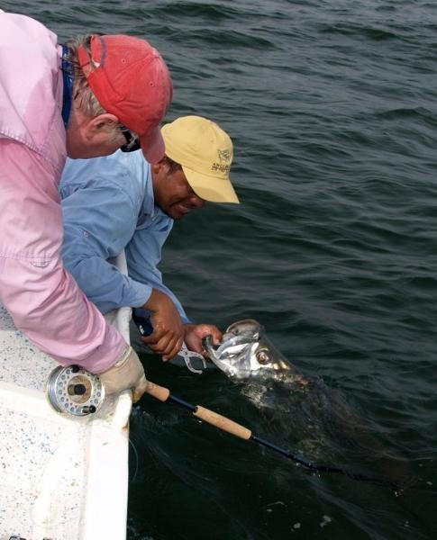 Fly fishing for tarpon mexico rio lagartos fly fishing for Fly fishing for tarpon