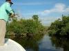 rio-lagartos-tarpon-fish04