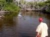 rio-lagartos-tarpon-fish08