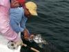 rio-lagartos-tarpon-fish28