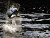 rio-lagartos-tarpon-header07