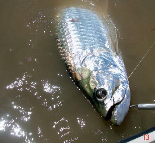 Fly fishing for tarpon florida keys tarpon anonymous for Fly fishing for tarpon