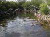 rio-lagartos-tarpon05