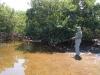 rio-lagartos-tarpon12