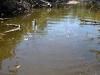 rio-lagartos-tarpon14