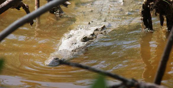 rio-lagartos-tarpon-header04