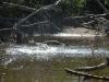 rio-lagartos-tarpon-header05