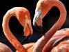 rio-lagartos-scene22