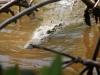 rio-lagartos-scene26