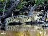 rio-lagartos-scene28